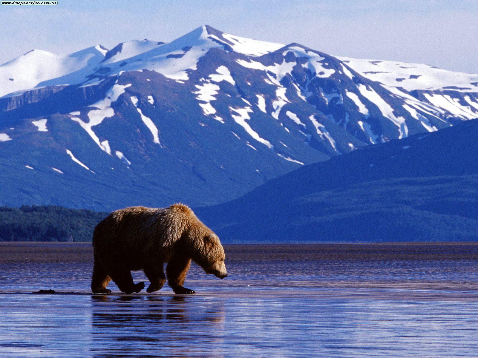 Free Travel Alaska Brochure