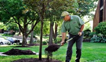 Getting Green: 5 Ways You May Be Harming Your Yard and Trees